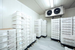 coldrooms-energy-savings