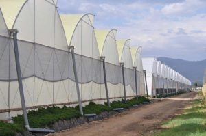 gothic-greenhouses-page-gallery (3)