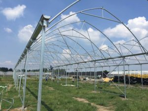 gothic-greenhouses-page-gallery (8)