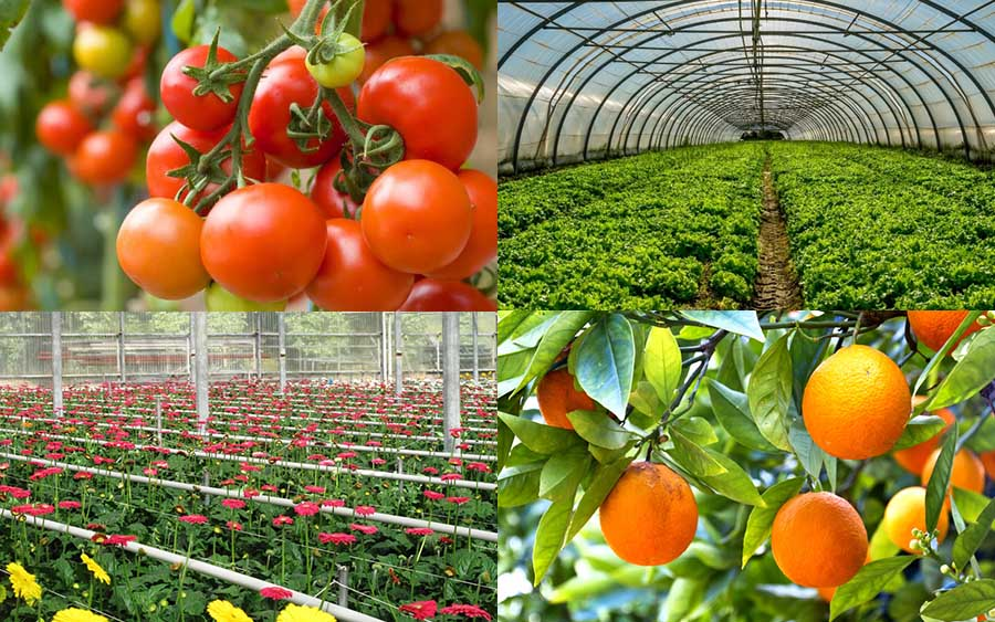 Our greenhouses are perfect for anything you care to grow