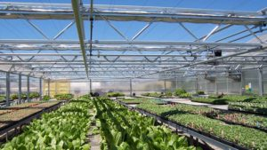 greenhouses-sale-page-retractable-roof