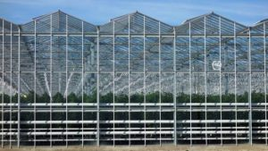 greenhouses-sale-page-venlo
