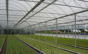 home-greenhouses-for-sale-gothic-semi-automated