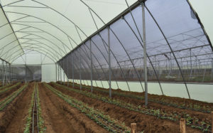 home-greenhouses-for-sale-polyfilm