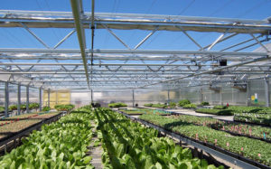 home-greenhouses-for-sale-retractable-roof