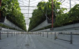 home-products-steel-greenhouse-supplies