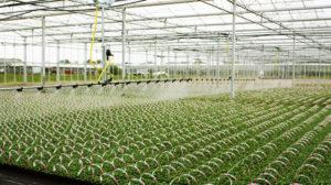 irrigation-page-boom-irrigation