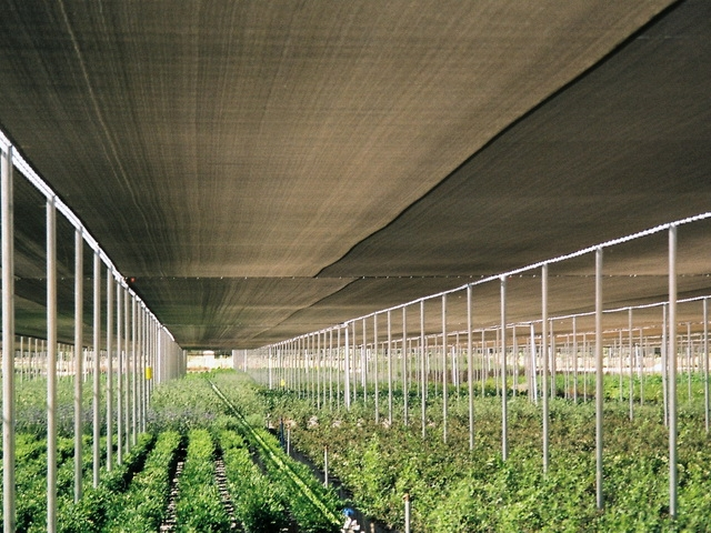shade-greenhouses-page-gallery-pic1