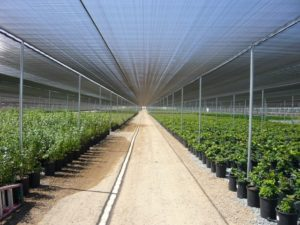 shade-greenhouses-page-gallery-pic3