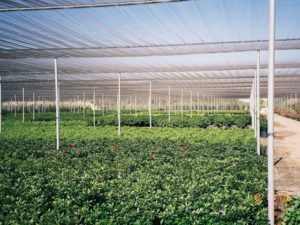 shade-greenhouses-page-gallery-pic5