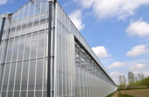 venlo-greenhouses-page-gallery-pic1