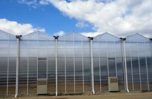 venlo-greenhouses-page-gallery-pic2