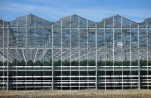 venlo-greenhouses-page-gallery-pic3