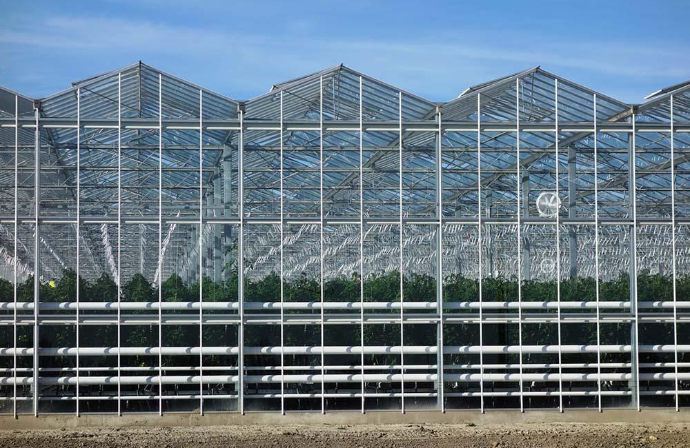 Venlo Greenhouses Javvagreen Limited