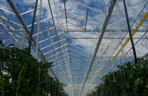 venlo-greenhouses-page-gallery-pic4