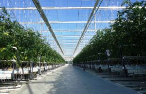 venlo-greenhouses-page-gallery-pic6