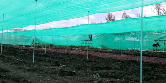 projects-ngong-veg-featured